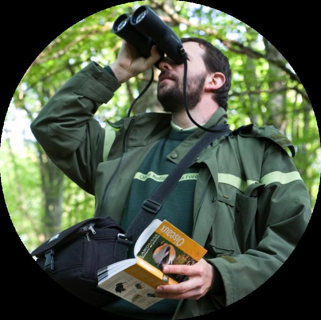 L'Office National des forêts (ONF) est l'acteur principal de la gestion des forêts publiques en France.